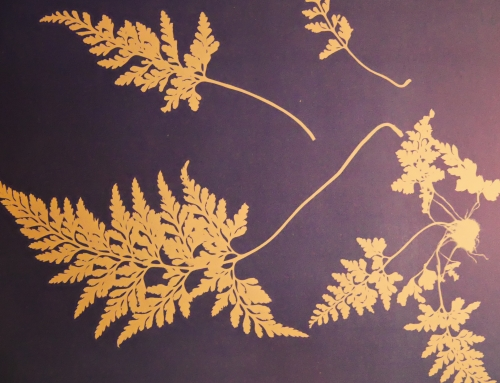 International Women's Day – Our Mighty Girl – Anna Atkins
